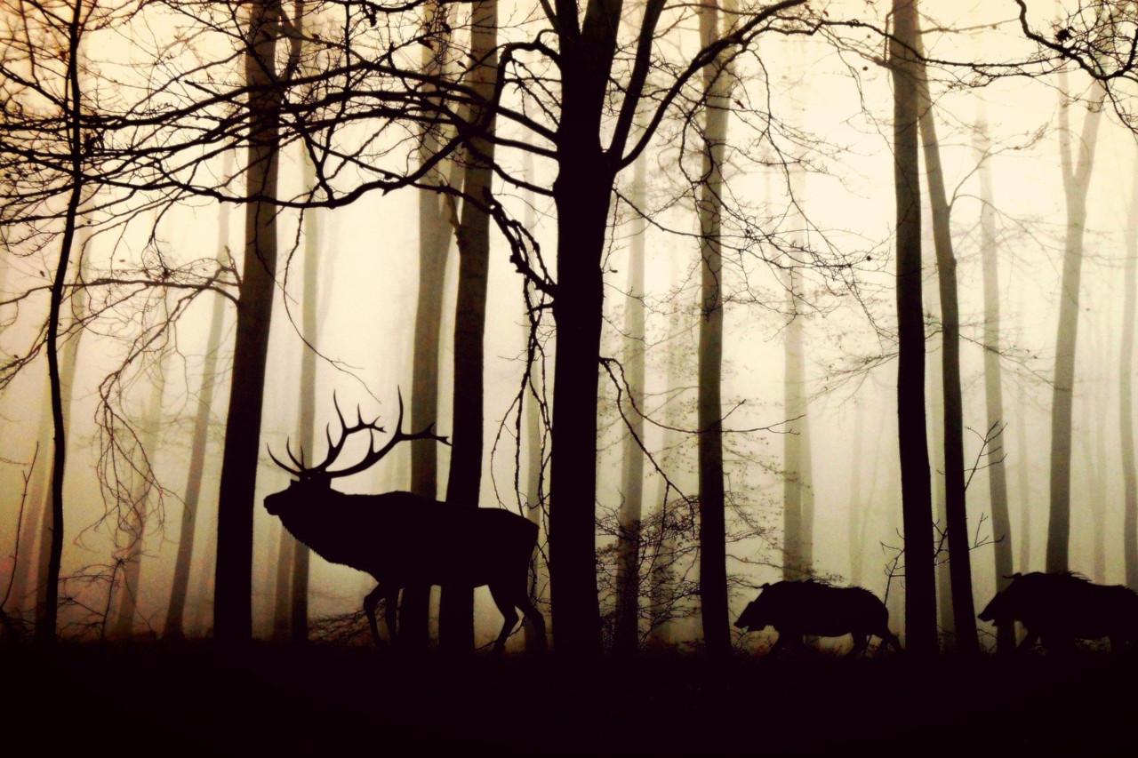 Patrimoine naturel et attractions touristiques dans les Ardennes belges